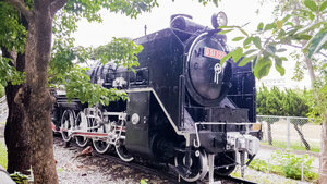 D51 222 steam locomotive obstructed by trees