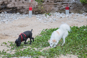 Marron and her friend at Satohama Beach in Urasoe