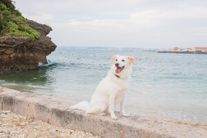 Marron loving it at Satohama Beach in Urasoe, Okinawa