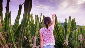 Kid friendly (to an extent) cactus farm