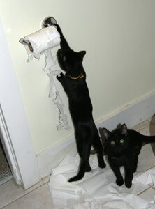 Cats being cats and attacking toilet paper rolls. Cat owners know.