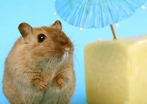 A cute mouse with a cheese block and cocktail umbrella