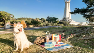 Picnic at the dog-friendly park!