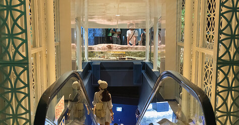 DMM Kariyushi Aquarium — Escalator To 1st Floor