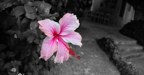 Selective Coloring Flower